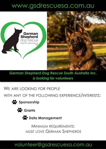Volunteer for German Shepherd Dog Rescue South Australia